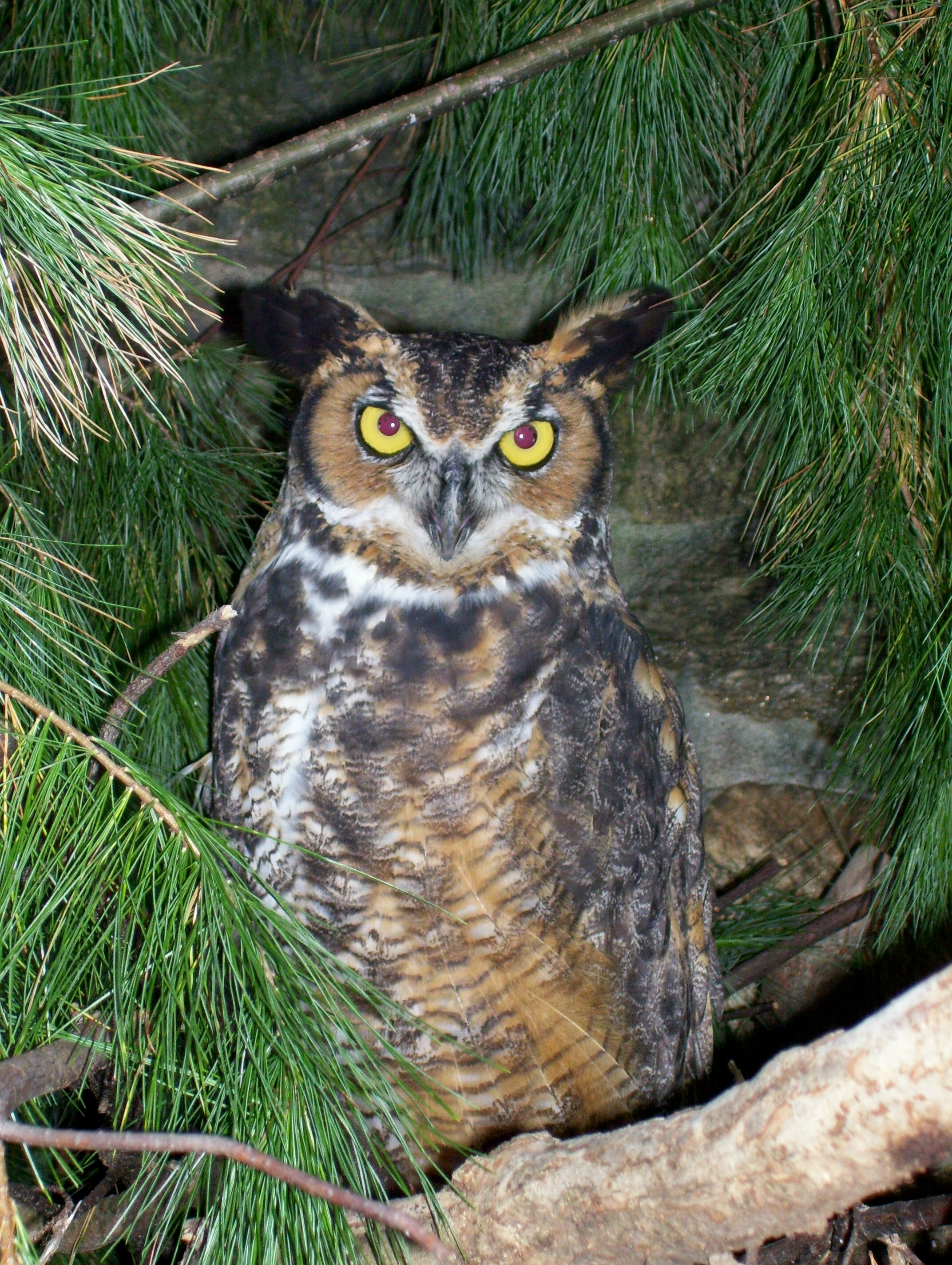 Visit Mary, our resident owl!